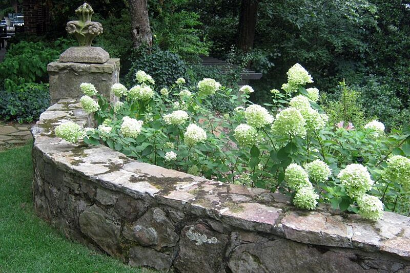 Why Your Hydrangea Didn T Bloom Southern Living
