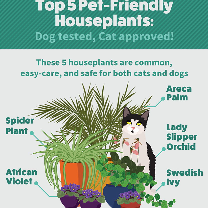 How To Grow Houseplants That Won T Hurt Your Cat Or Dog Food Wine