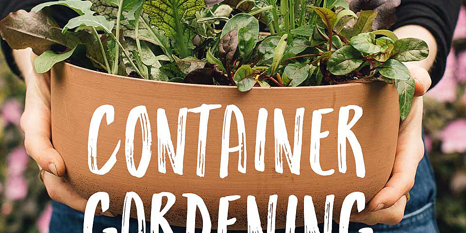 Container Gardening Ideas for Growing Your Own Food in Small Spaces