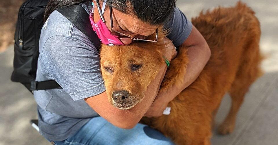 How Honey and His Owner Reunited After 7 Years Apart