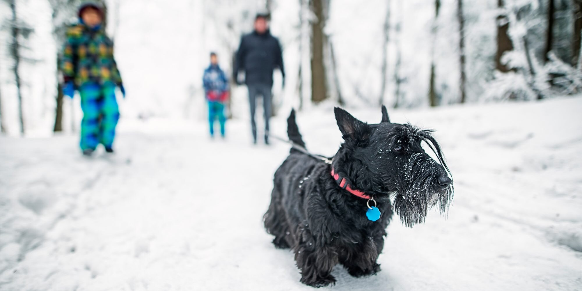 The 16 Best Dog Breeds for Cold Weather Climates