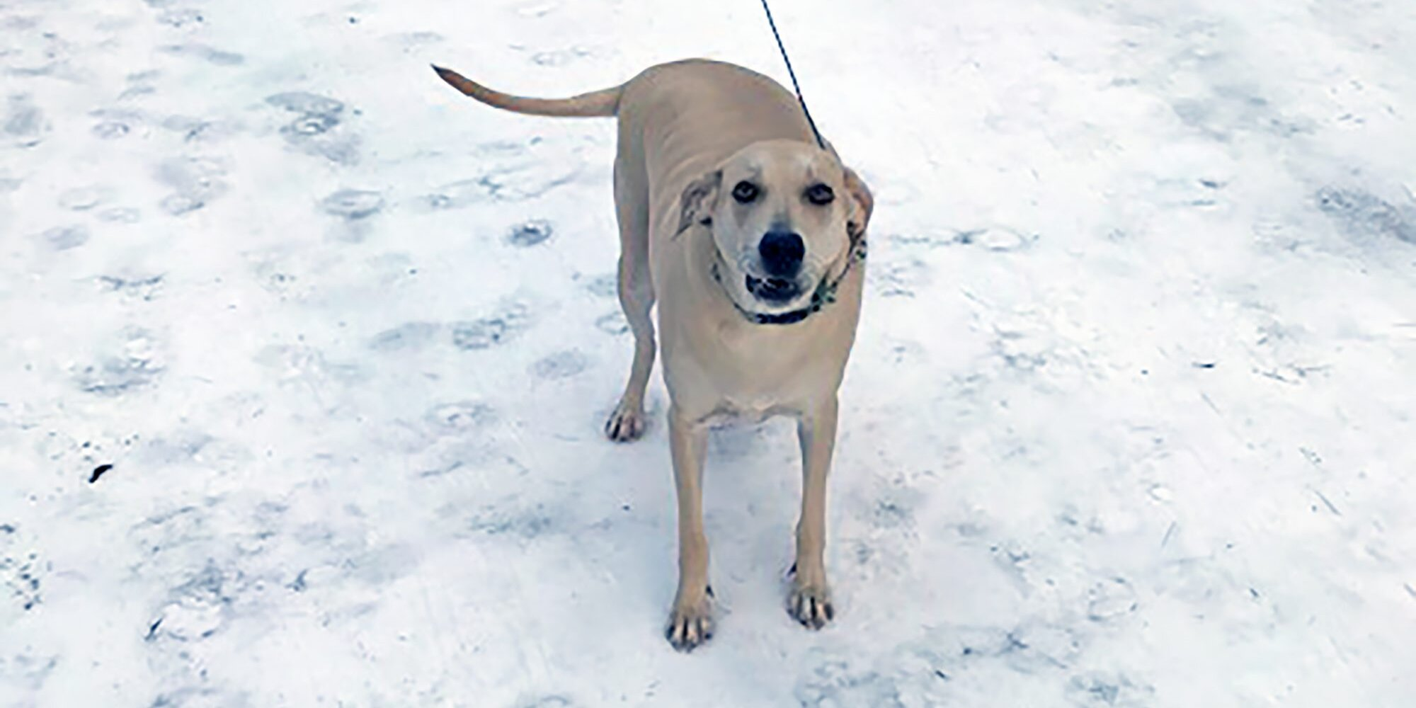 Hero Lab Leads Rescuers to Blind Owner Who Fell in Frigid Brook