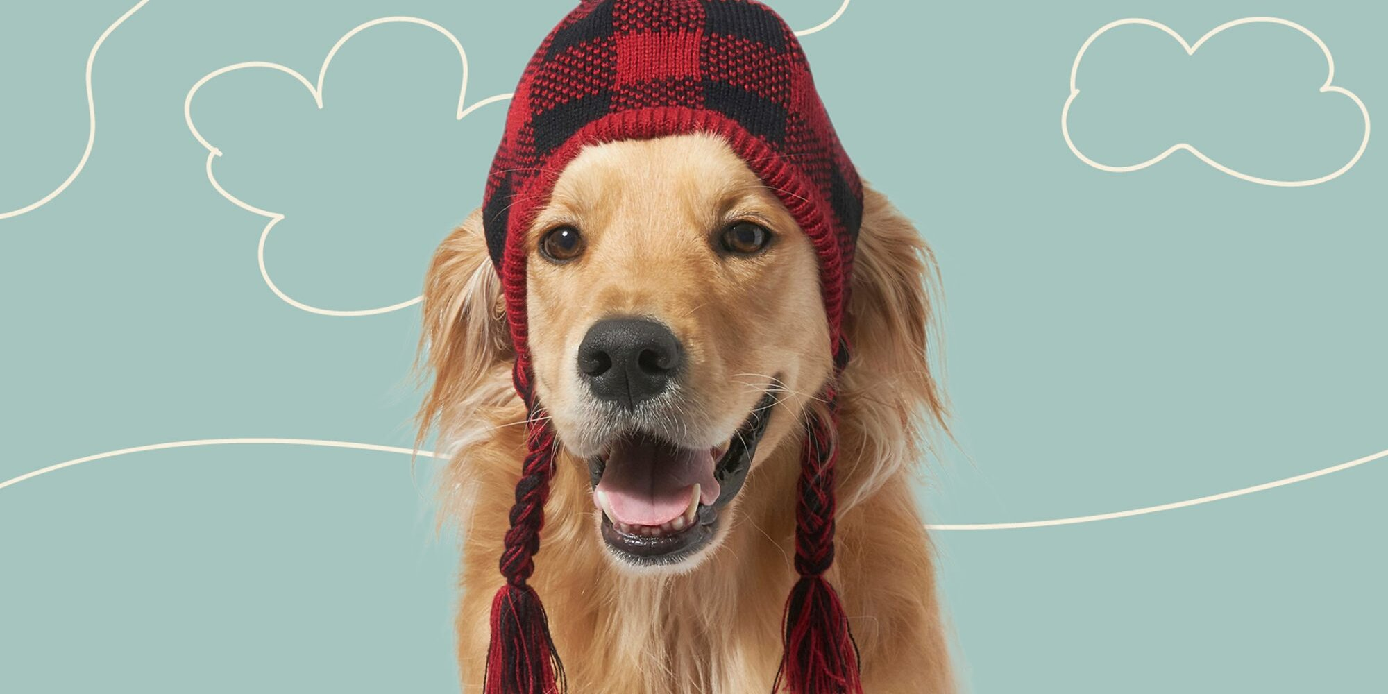 10 of the Cutest Winter Hats for Dogs