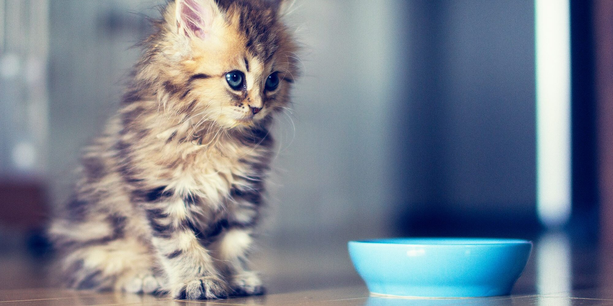Milk, Formula, or Food? Here's What To Feed Your Kitten During the First Year