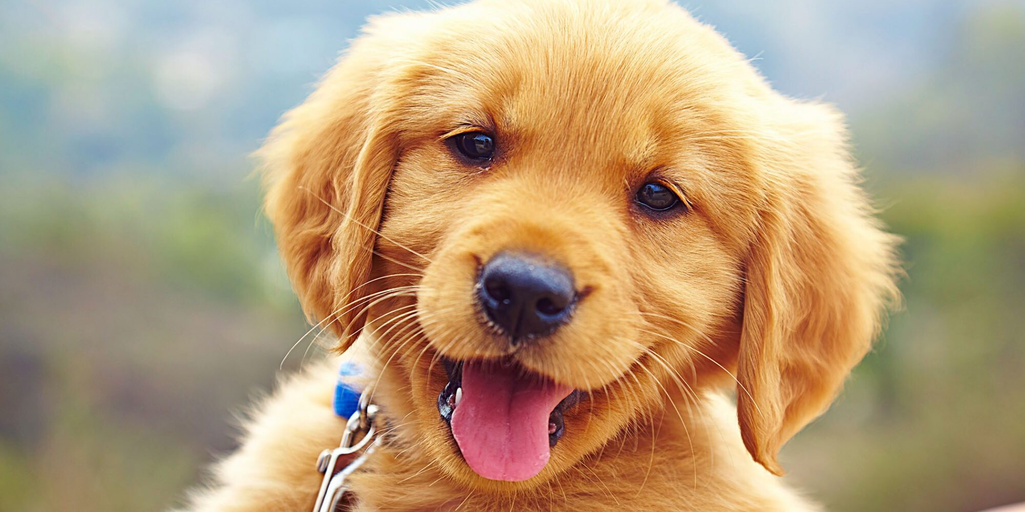 First-Year Puppy Vaccination Schedule Chart to Follow