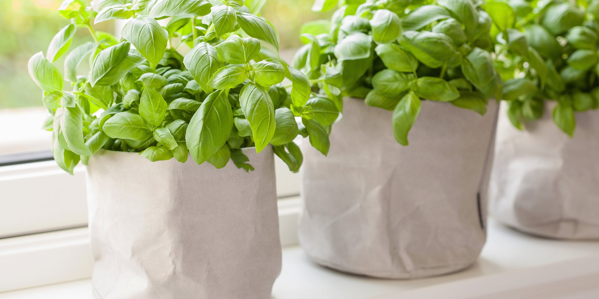 This TikTok Hack Will Let You Grow Basil From What You Buy at the Store