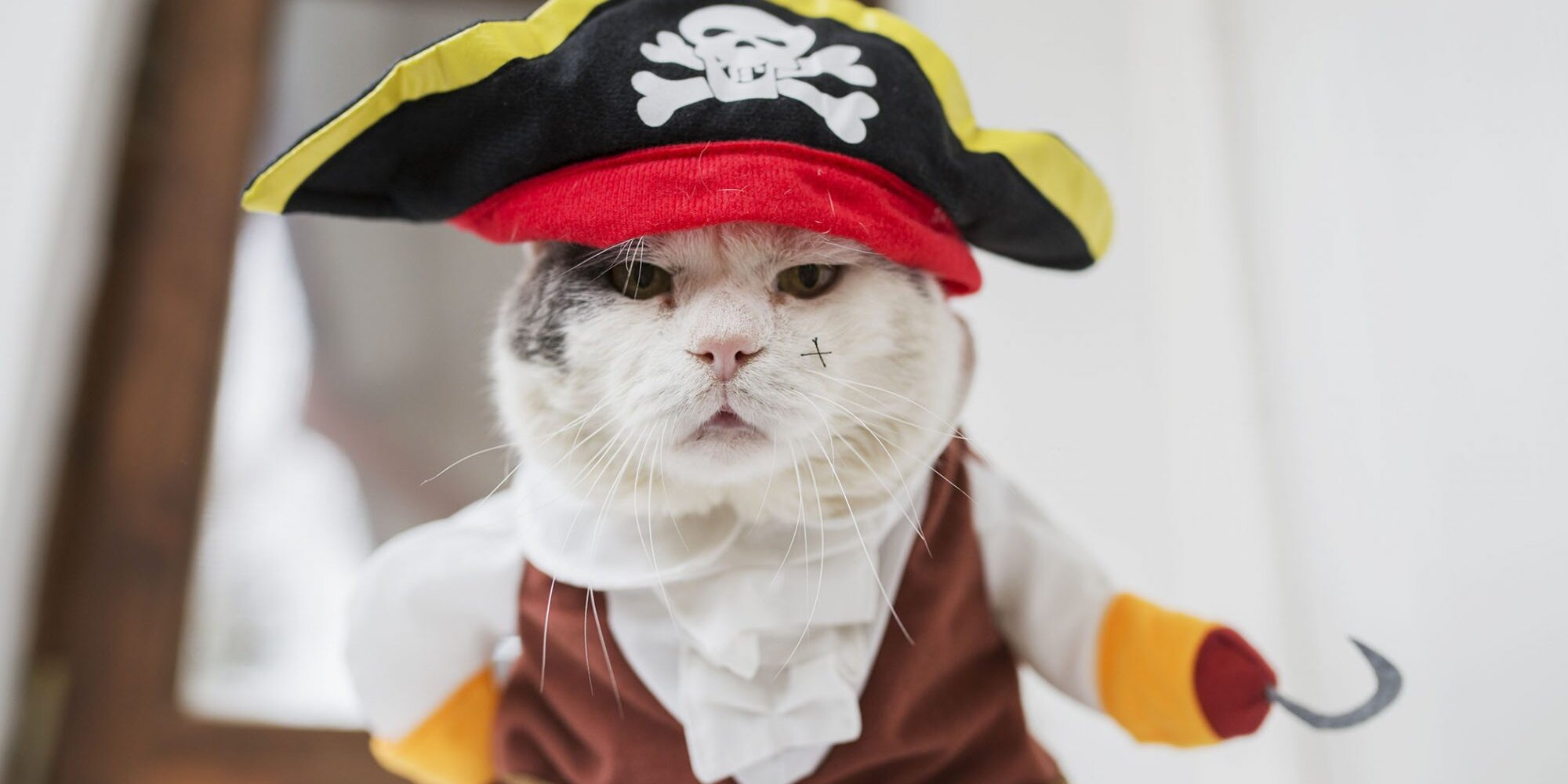 14 Bewitchingly Cute Halloween Kitties to Get You in the Spooky Spirit