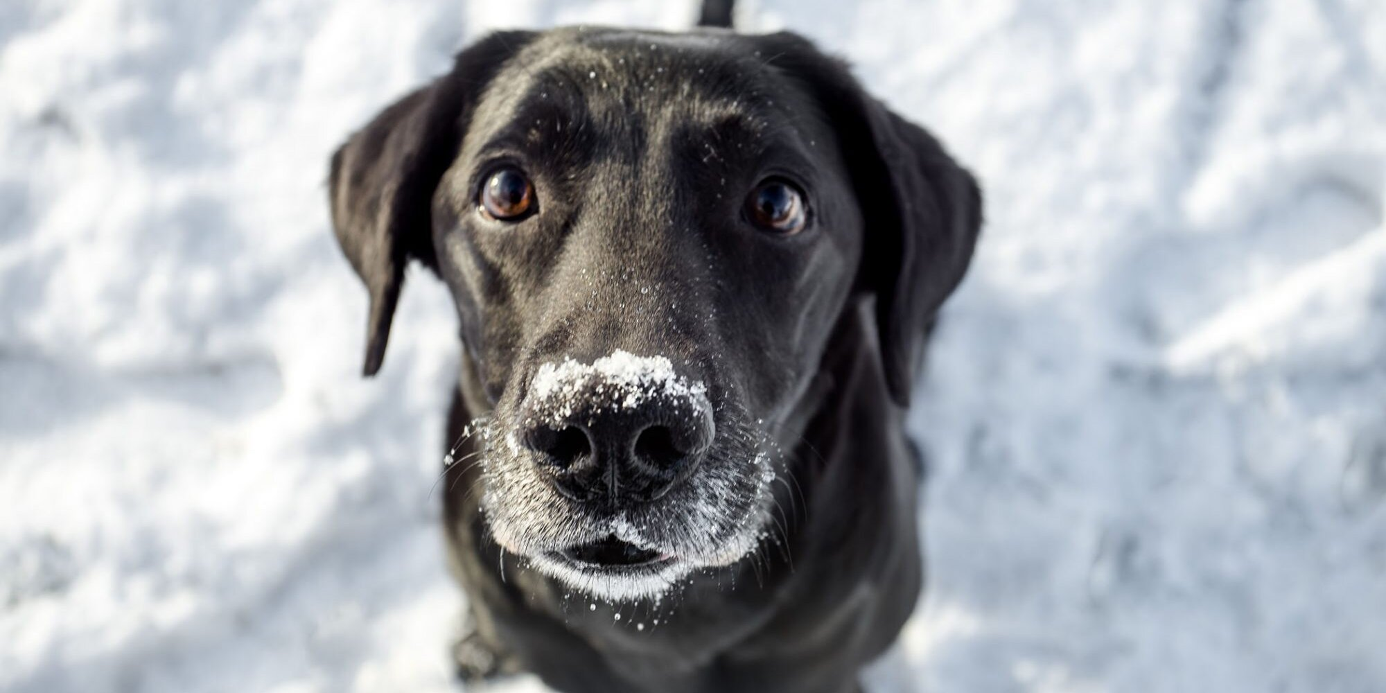 Brrr: How to Keep Your Dog Safe, Warm During Winter