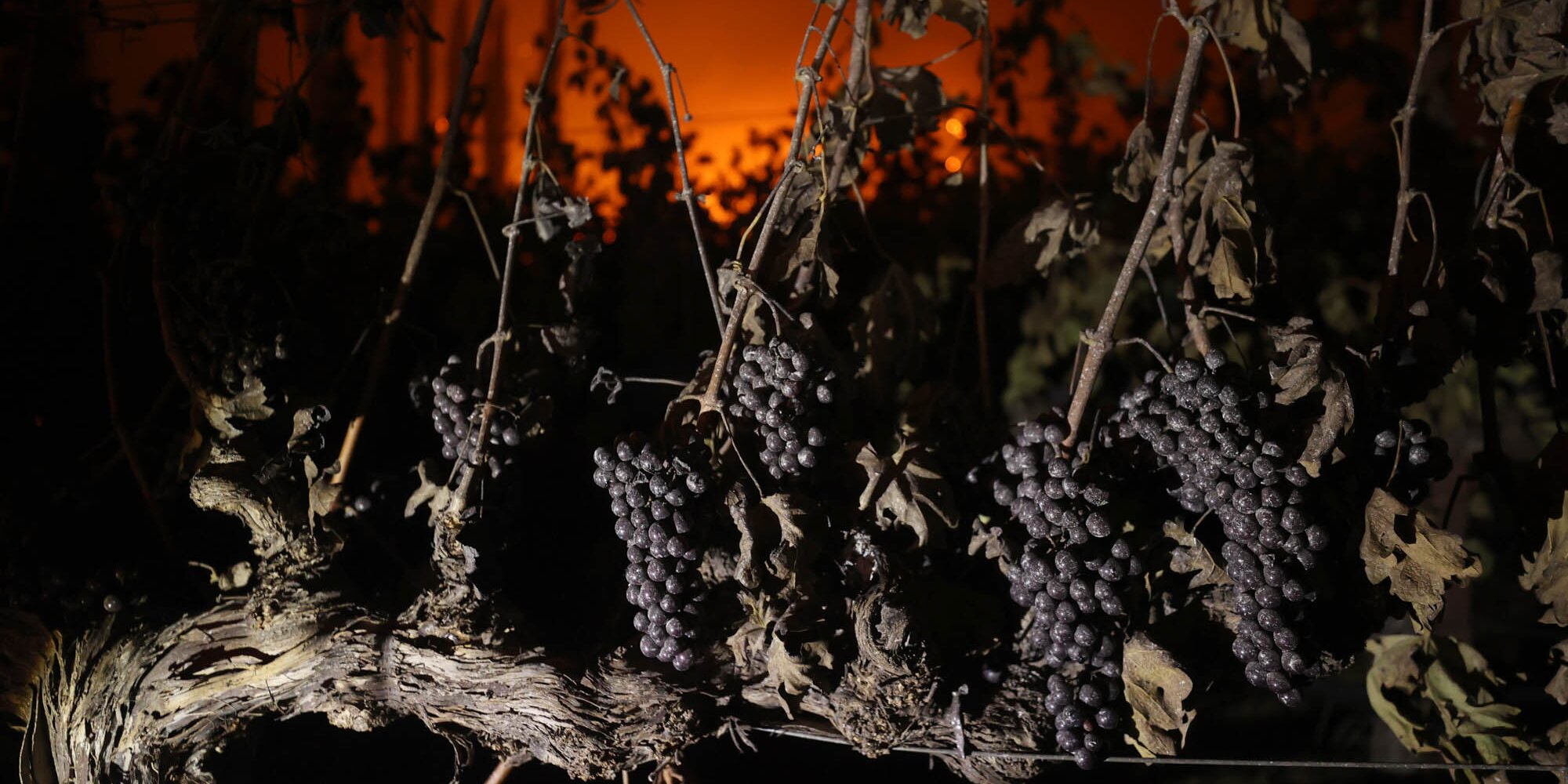 Wildfires Destroy Homes and Iconic Wineries in Northern California Wine Country