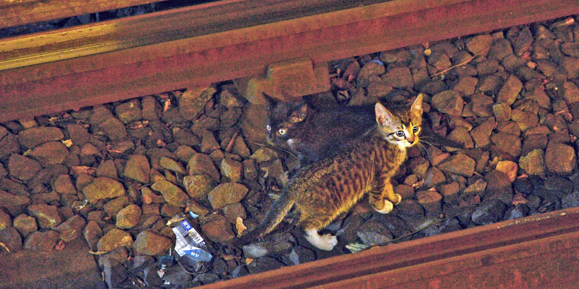 Rail Yard Cat Rescues Are This NY Transit Worker's Specialty