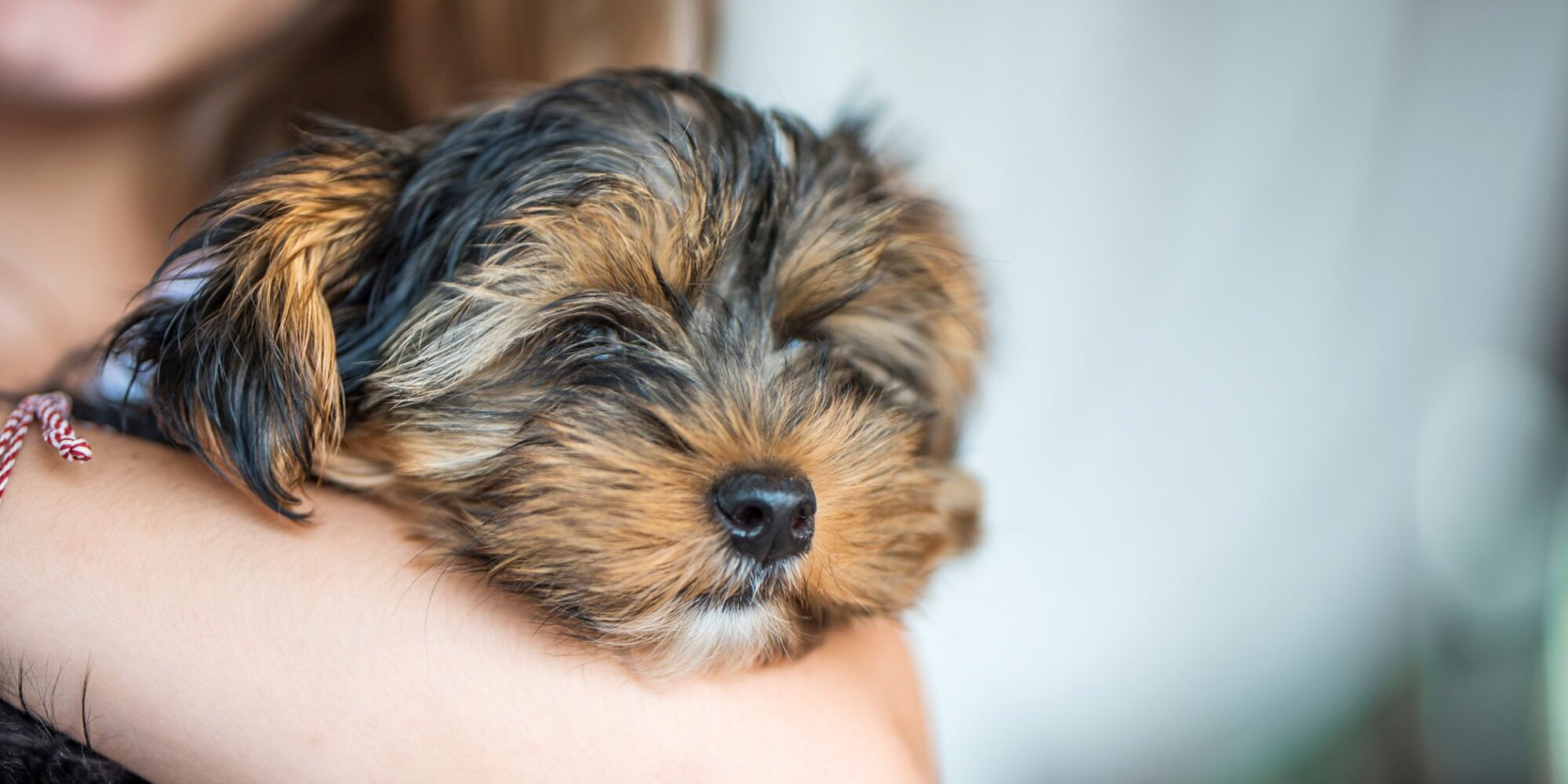 Everything You'll Need When Bringing Home a New Puppy