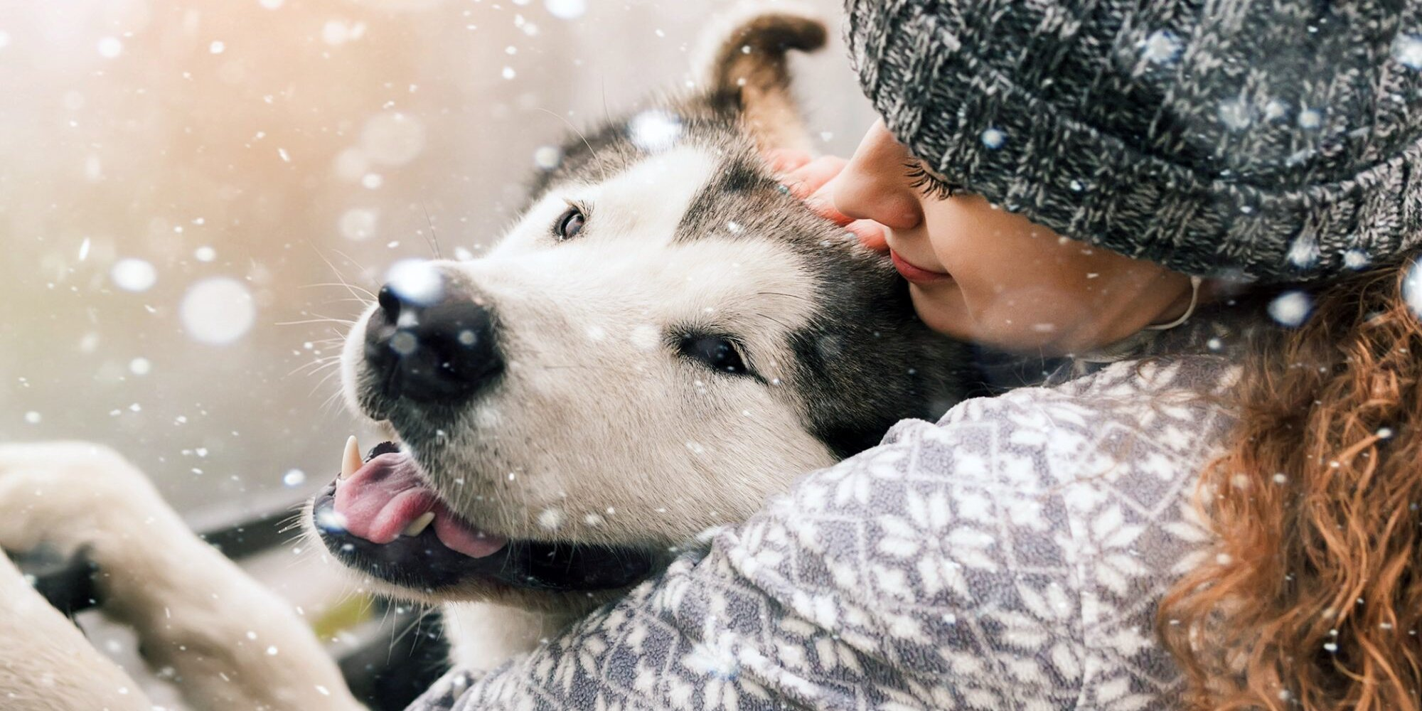 How Cold Is Too Cold for Dogs to Go Outside in the Winter?