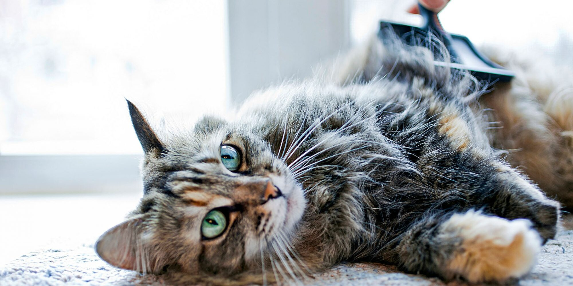 How To Care For Your Cat Expert Tips From A Vet Covering Food And Water Needs To Vet Visits Daily Paws