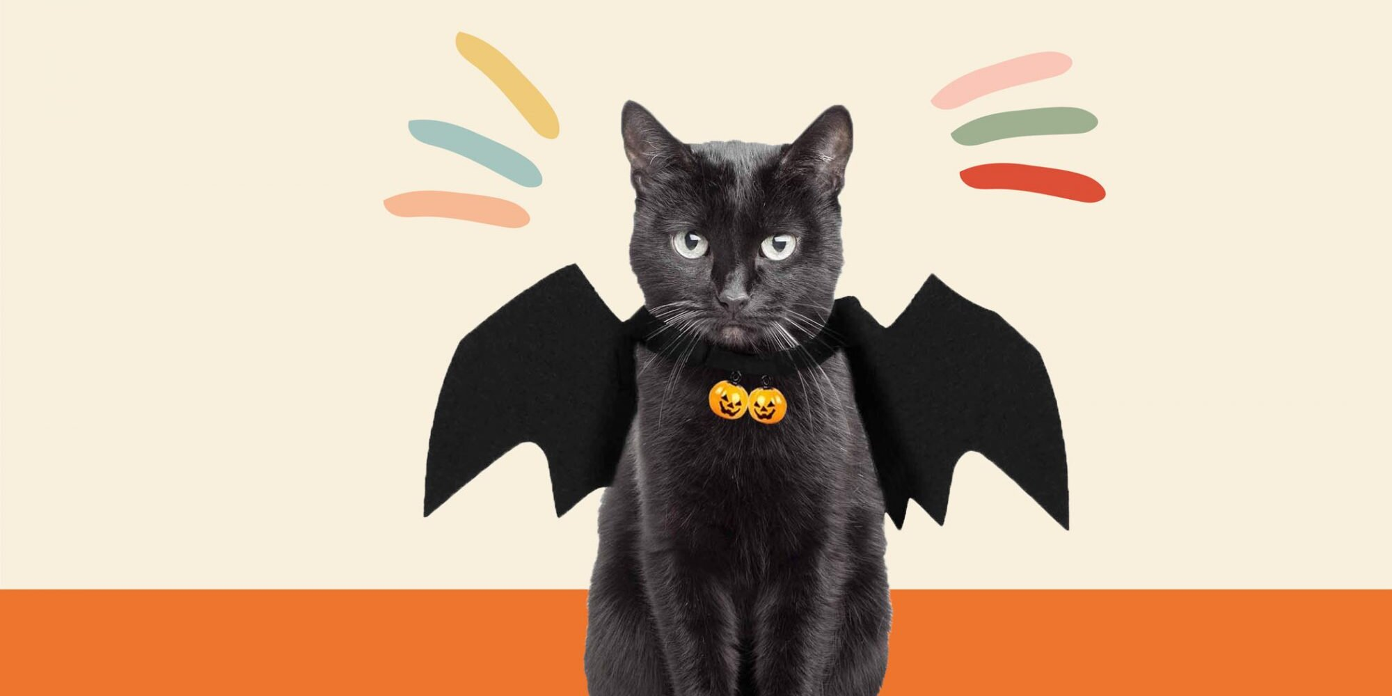 20 of the Best Pet Halloween Costumes for Cats or Dogs   Daily Paws