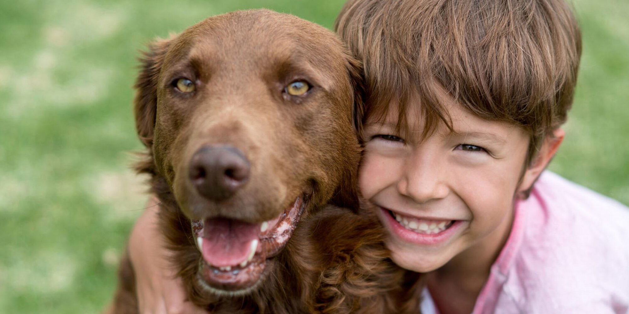 Your Guide to Adopting a Dog for the First Time