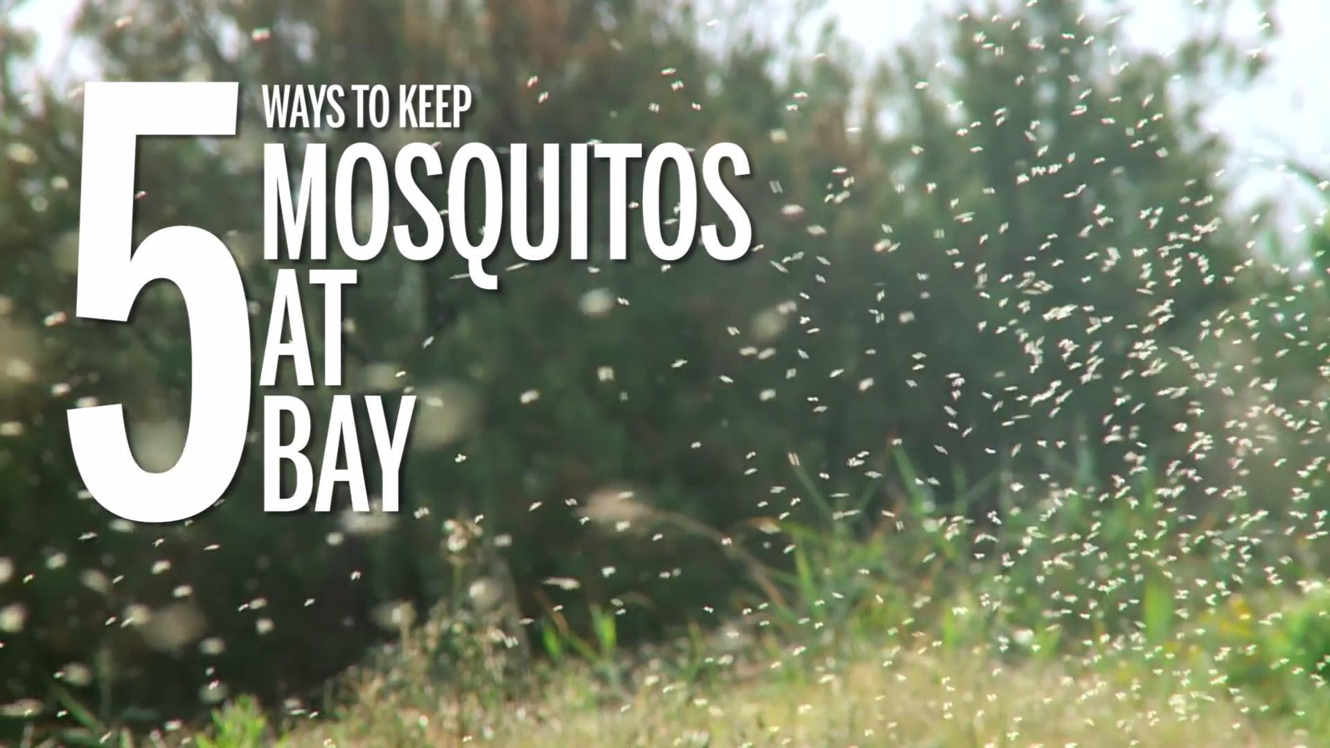Types of fly bites: Horse fly bites
