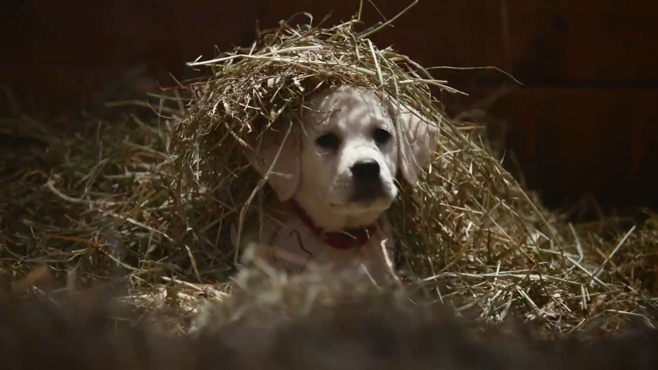 Budweiser's Super Bowl ad again features adorable puppy, horses