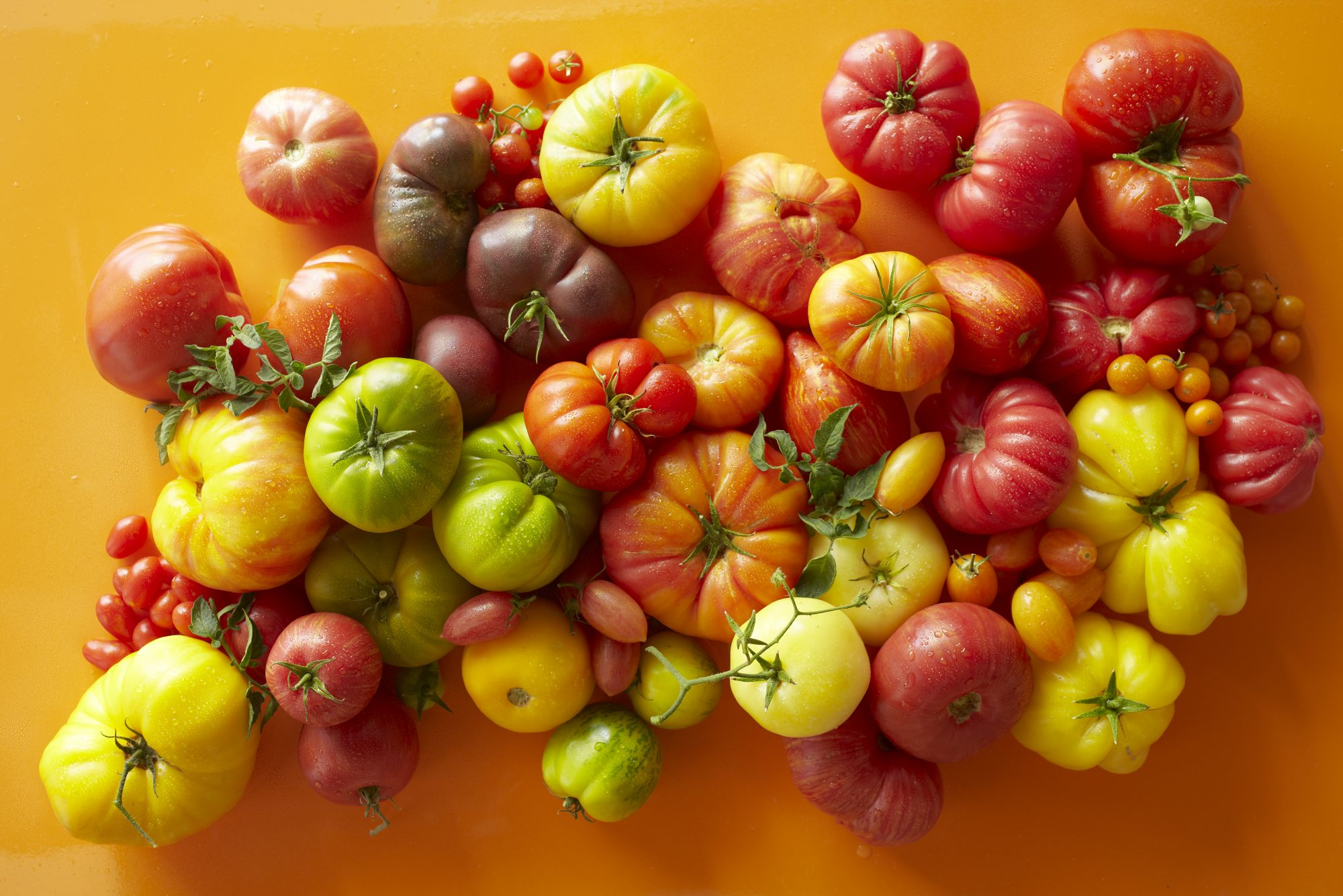 What Are Heirloom Tomatoes?