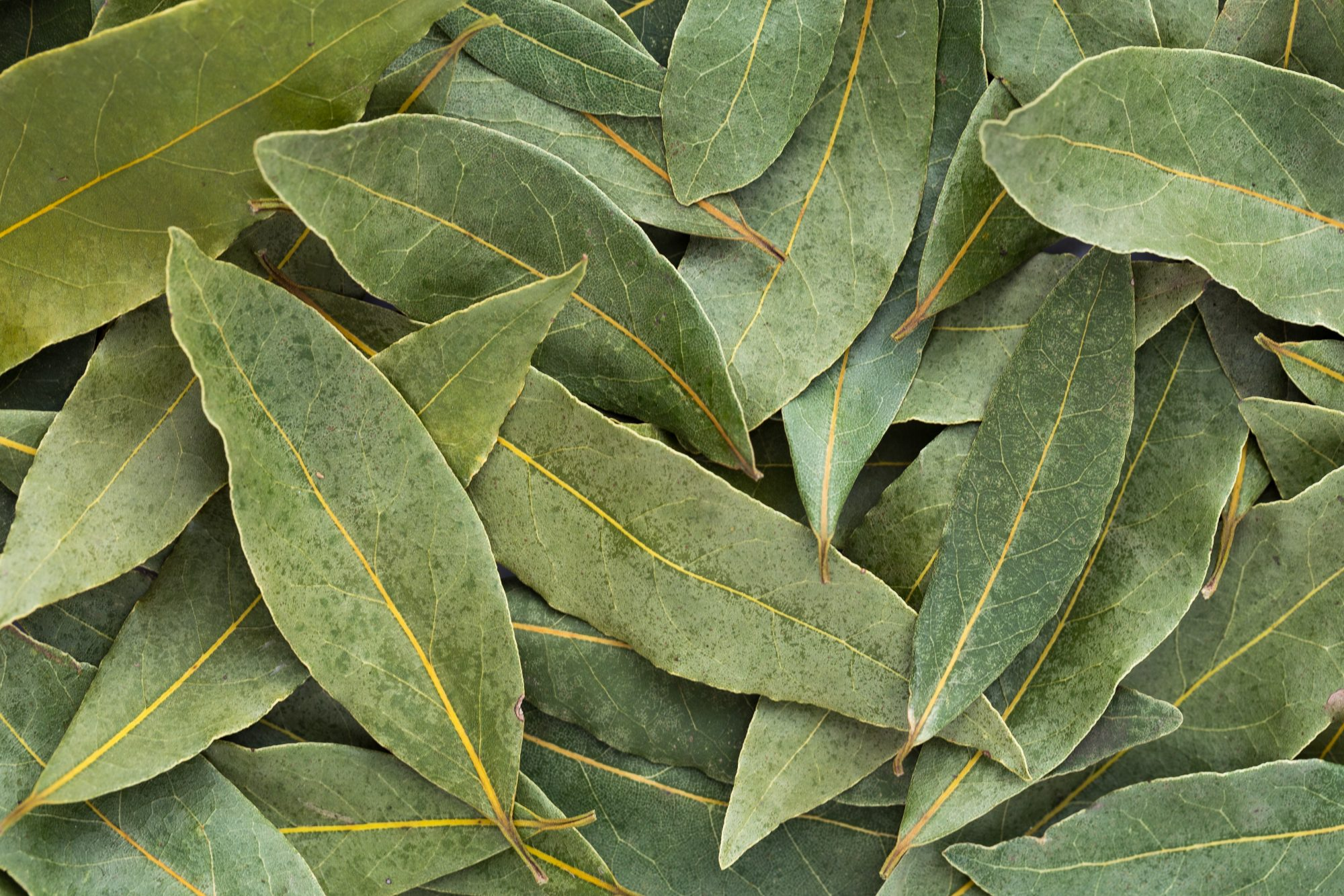 Bay Leaves Getty 1/27/20