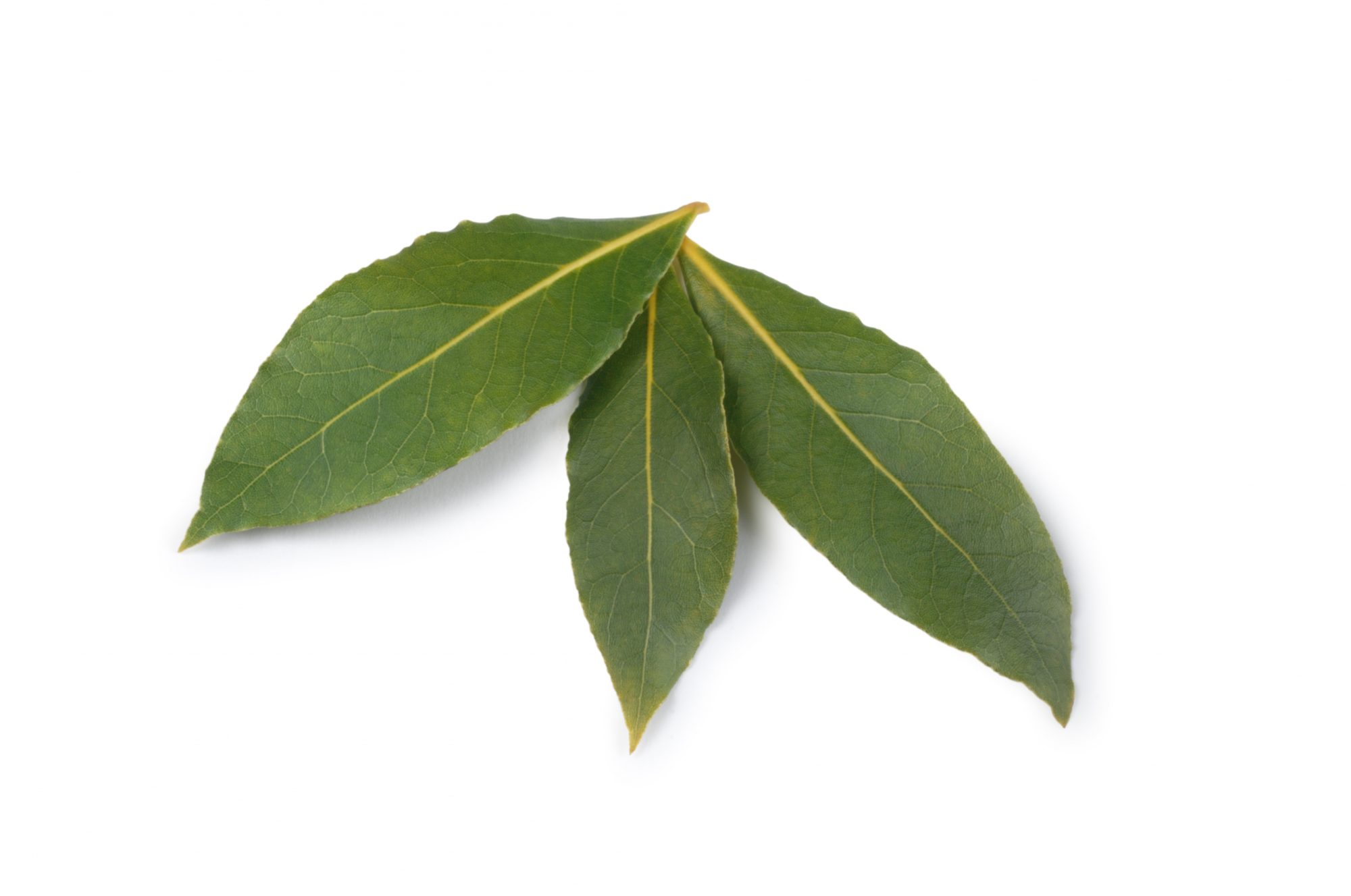Bay Leaves On White Getty 1/27/20