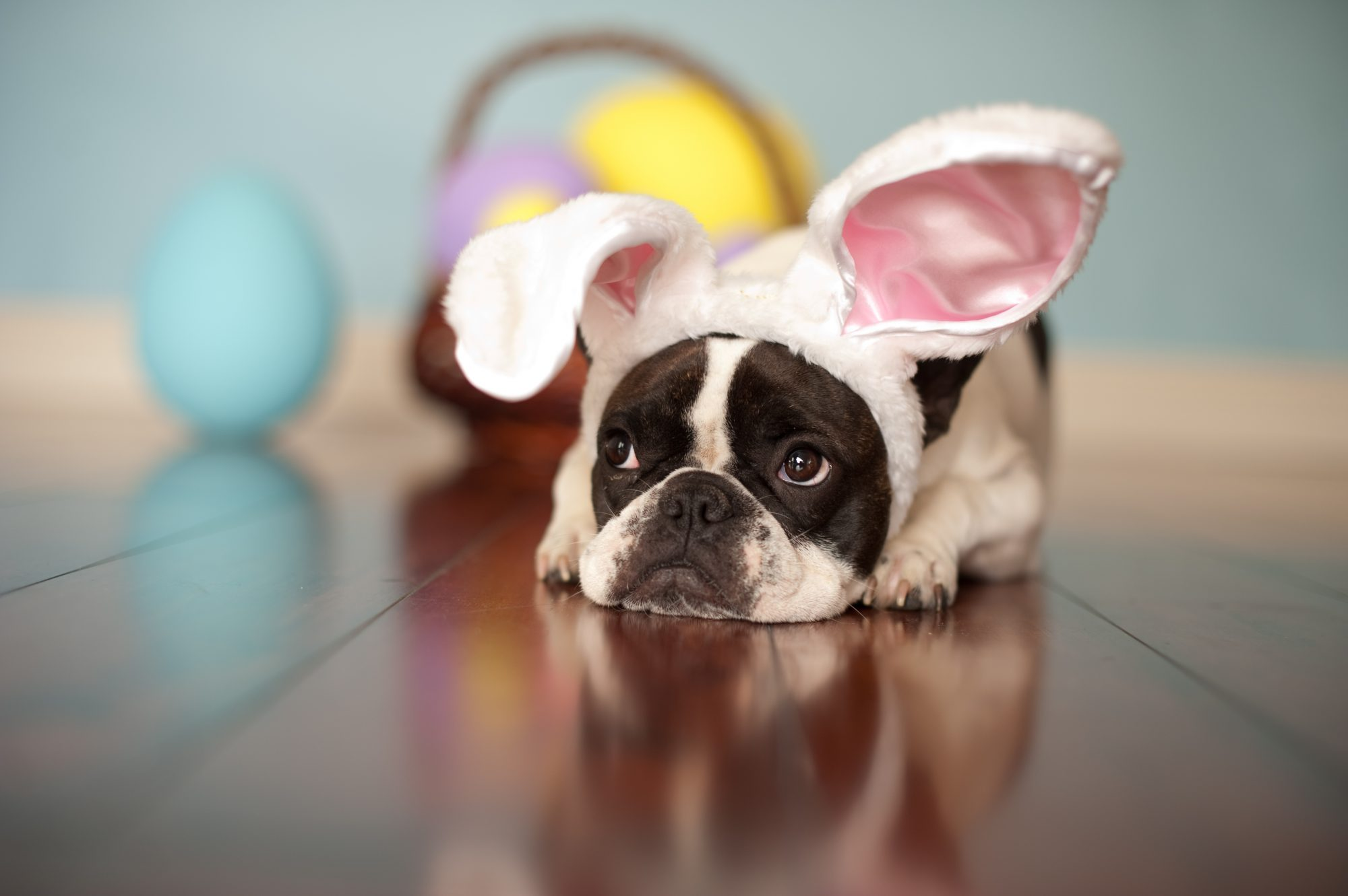 Pet in the Iconic Cadbury Egg Commercial