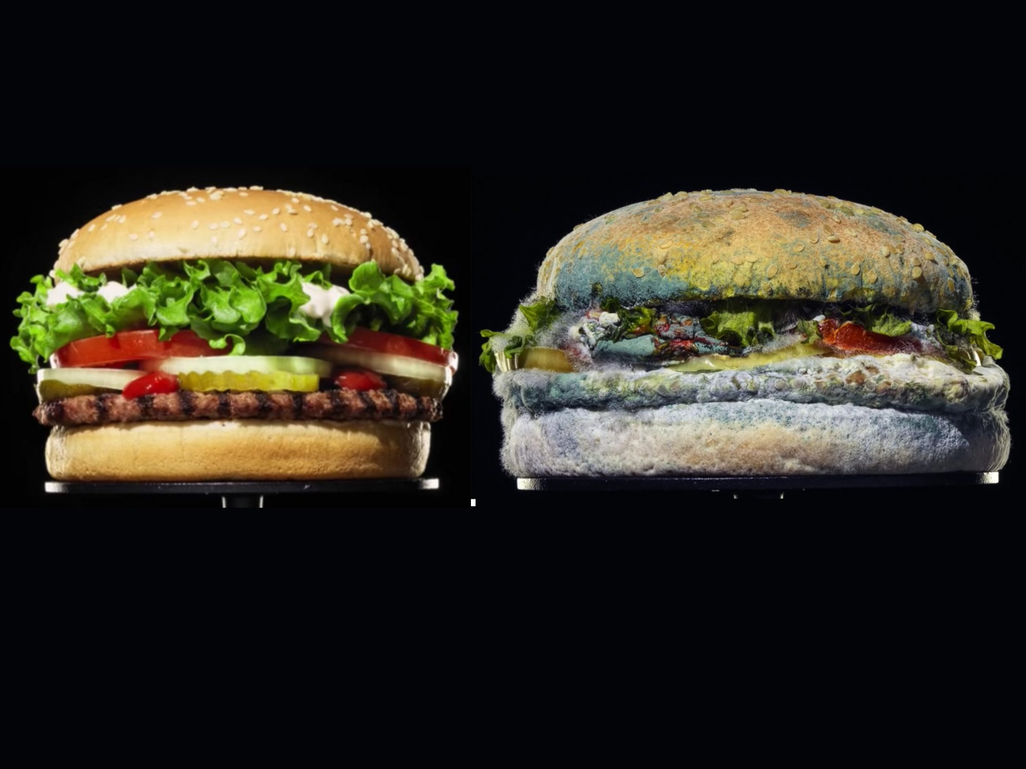 Burger King's New Ad Campaign Features a Moldy Whopper, and We Can't Look Away