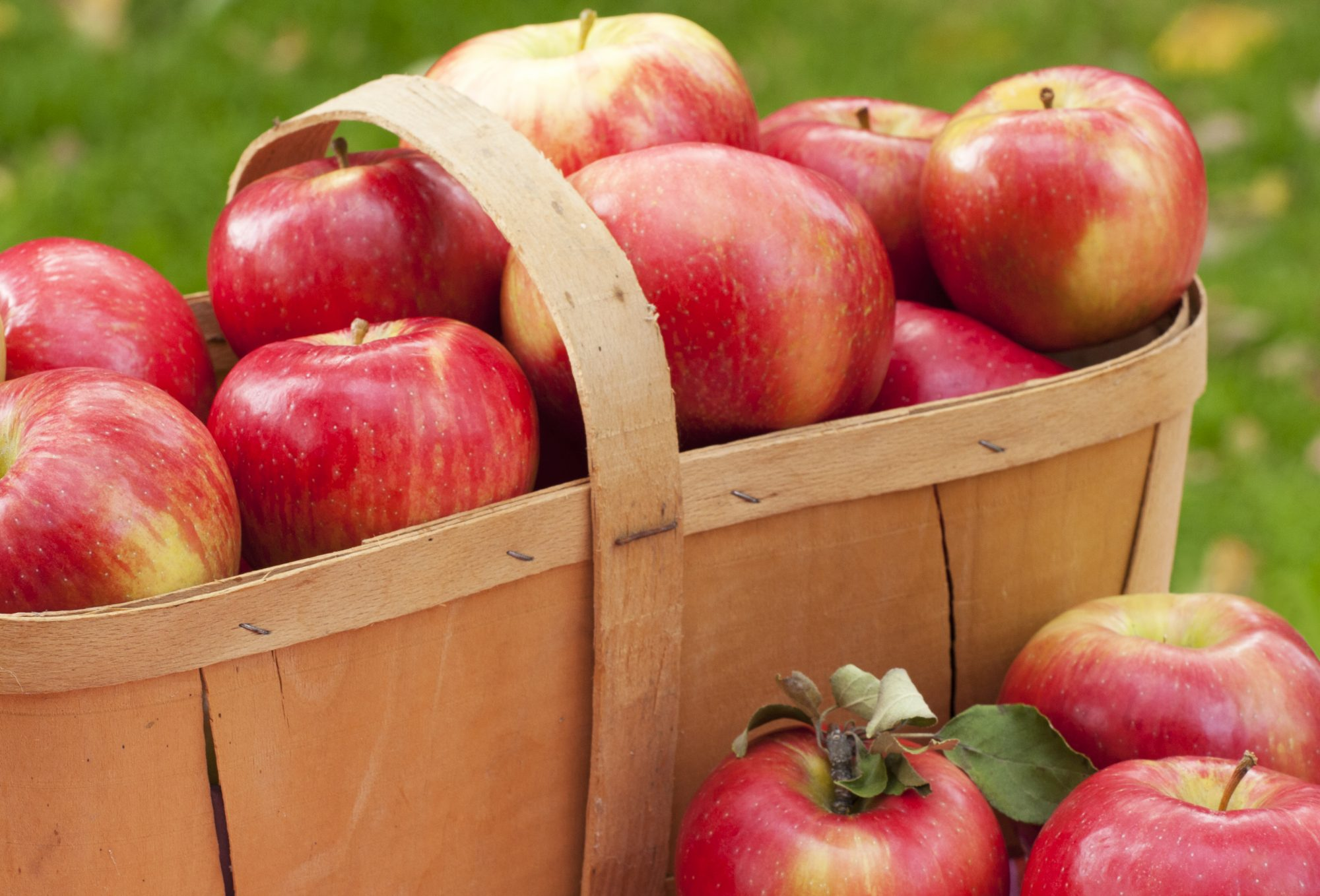 Honeycrisp in basket Getty 7/27/20