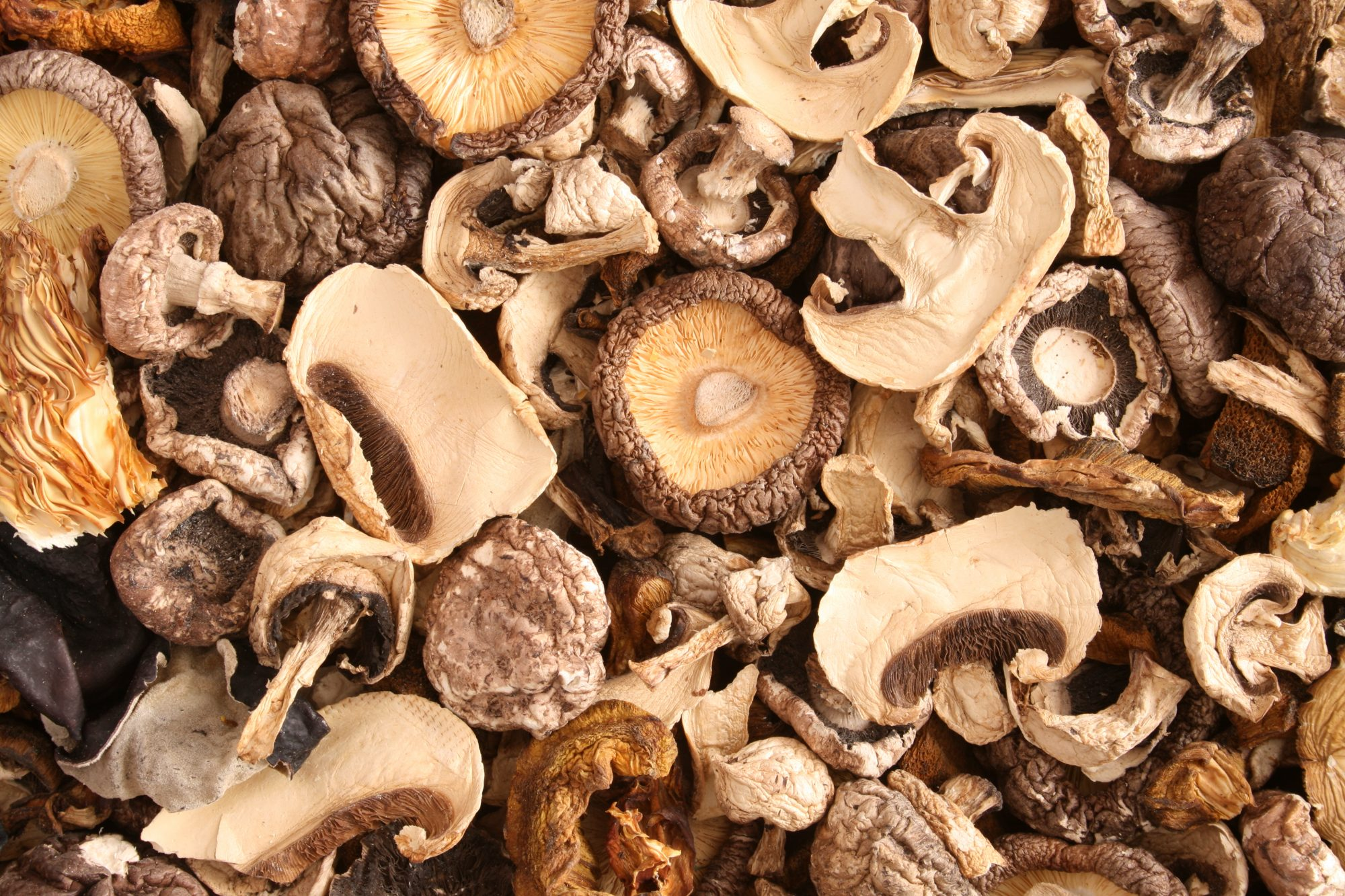 090120_Dried Mushrooms