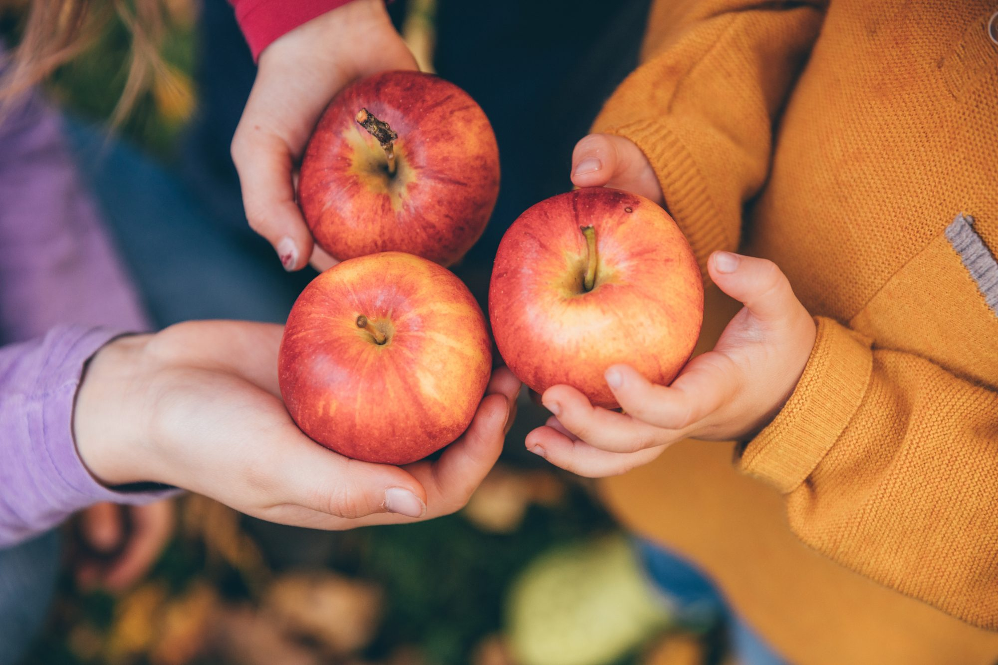 The 50 Best Spots for Apple Picking in the US, According to Yelp