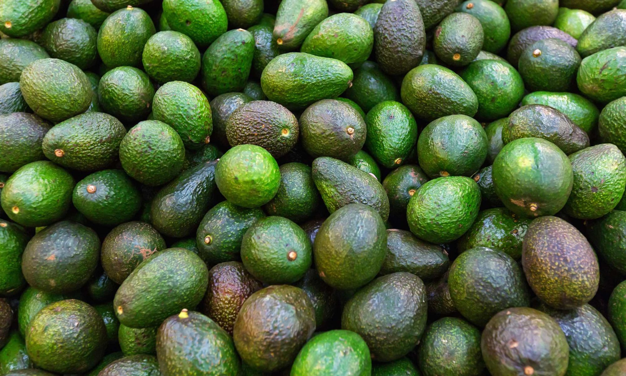 avocado sales double in china