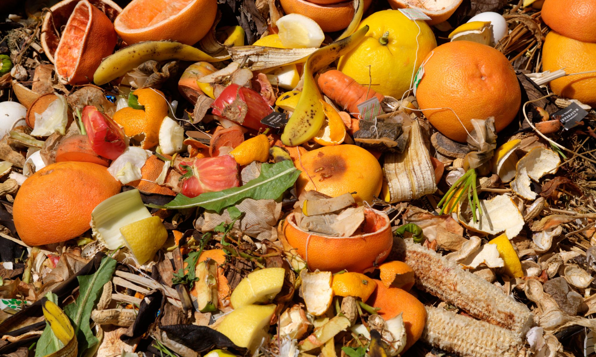 EC: You Can Make Tea from the Stuff in Your Compost Heap