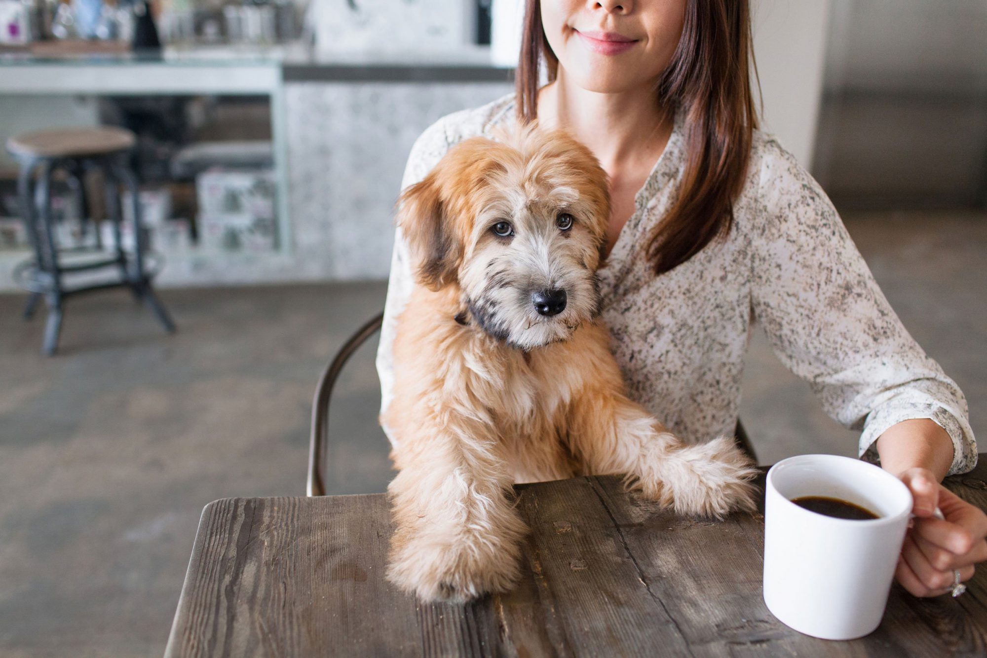 EC: This Kickstarter Project is Billing Itself as the First 'Coffee for Dogs'