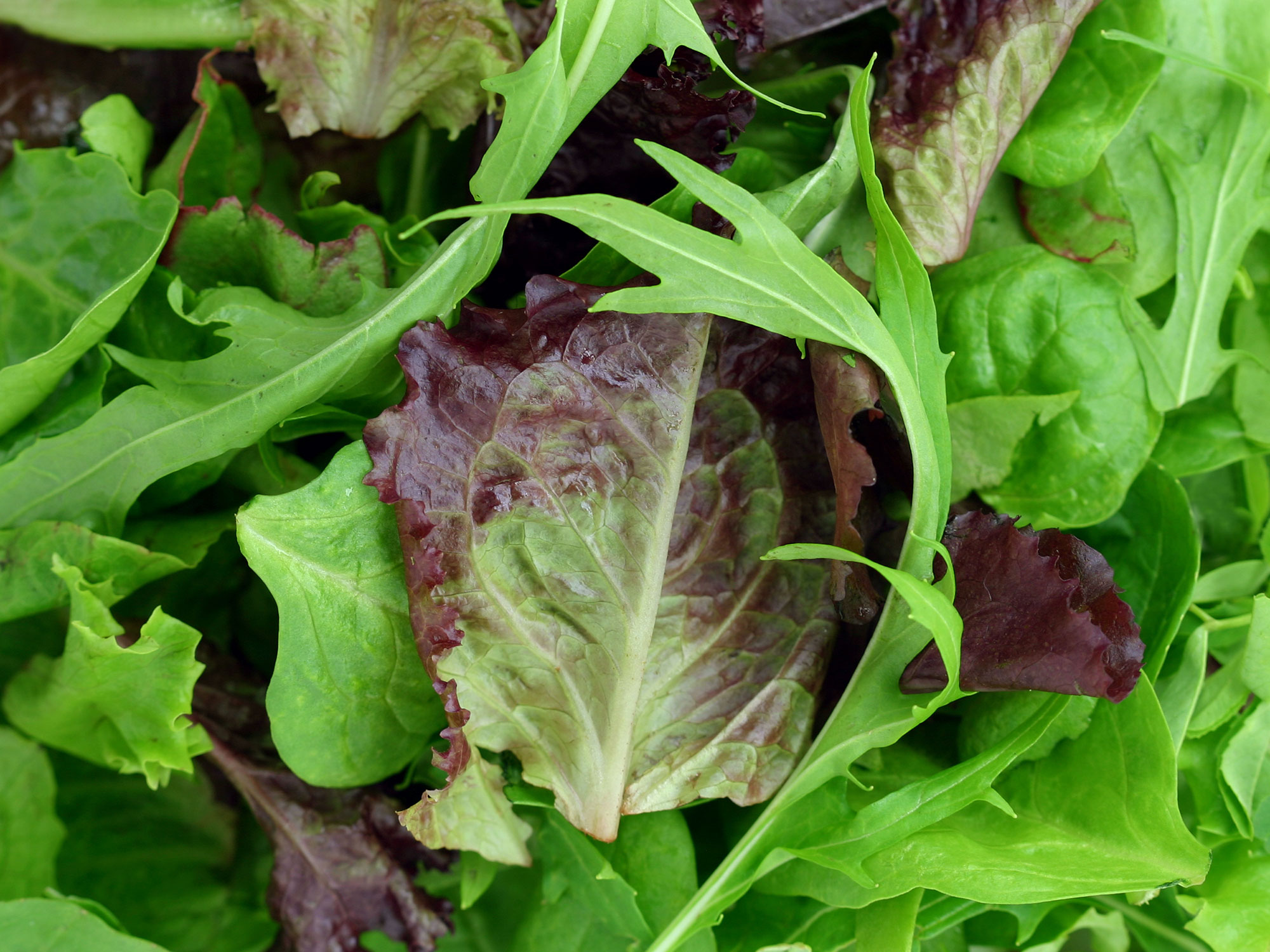 Here's Exactly How to Store Salad Greens Until You Need Them