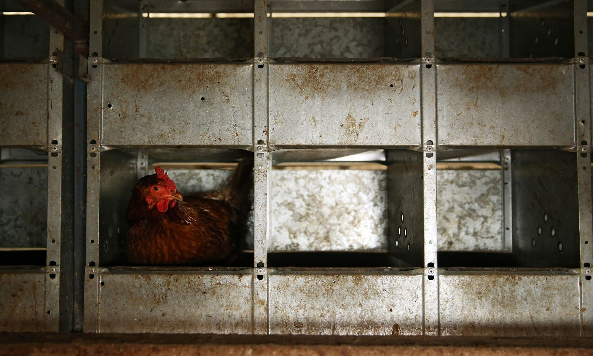 EC: Cage-Free Egg Labels Don't Always Mean What You Think