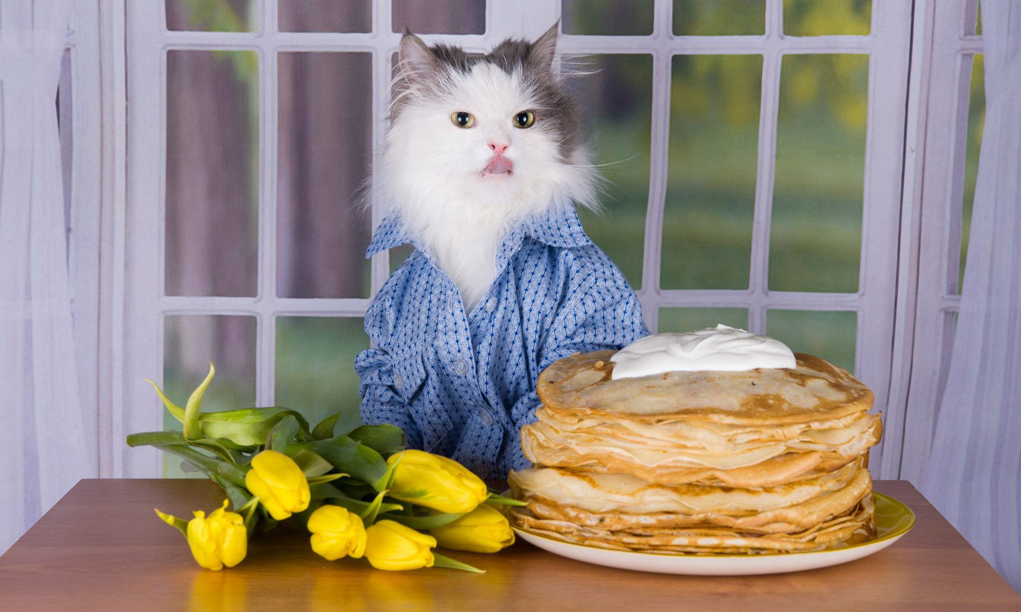 EC: These Videos of Cute Animals Eating Pancakes Will Make Things Feel OK