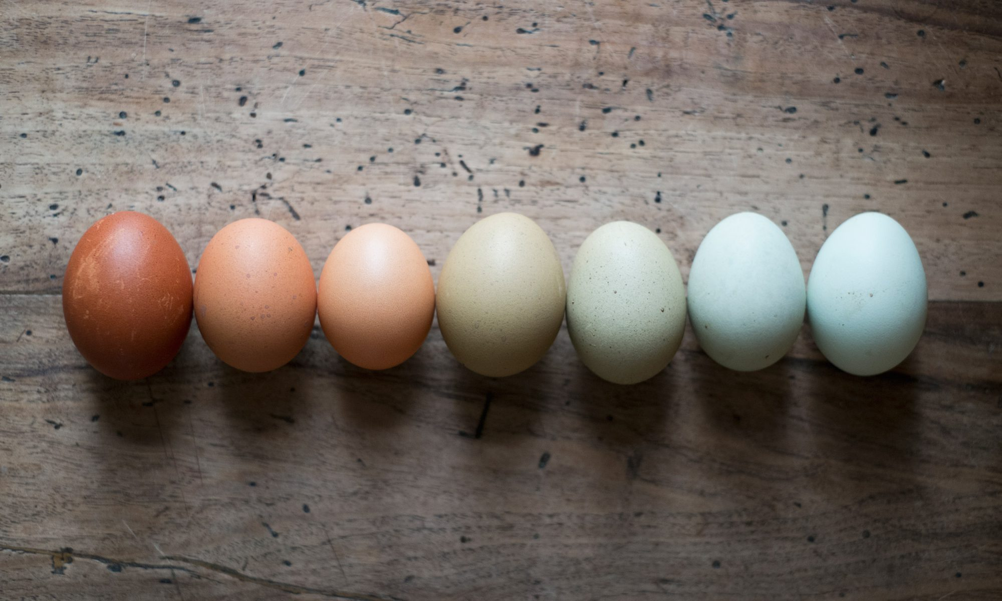 EC: What's the Difference Between Brown and White Eggs?