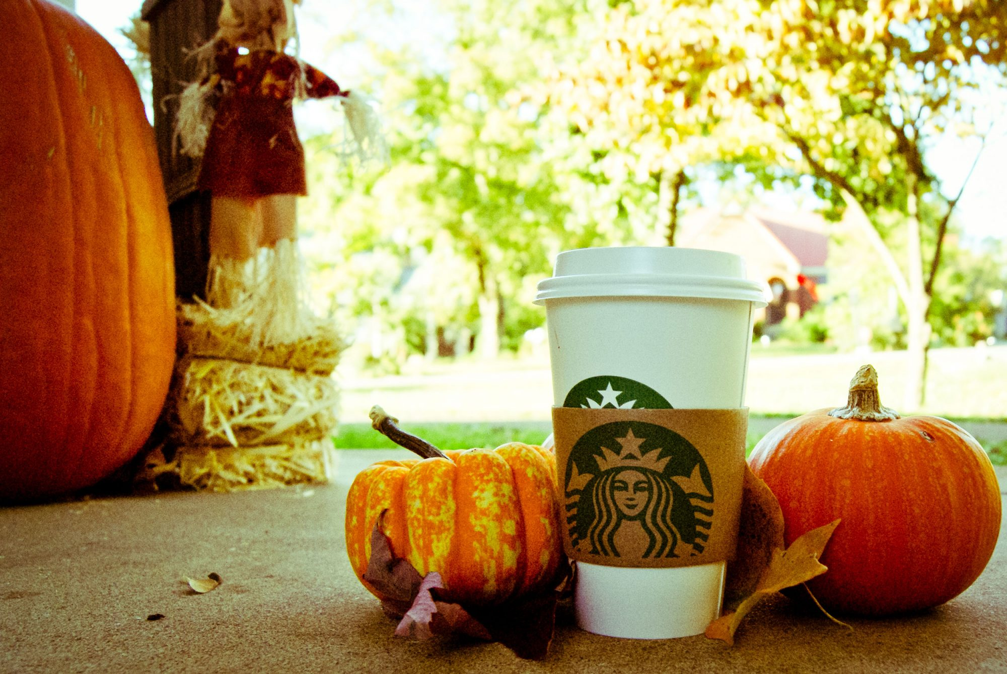 EC: How to Dress Like Pumpkin Spice for Halloween