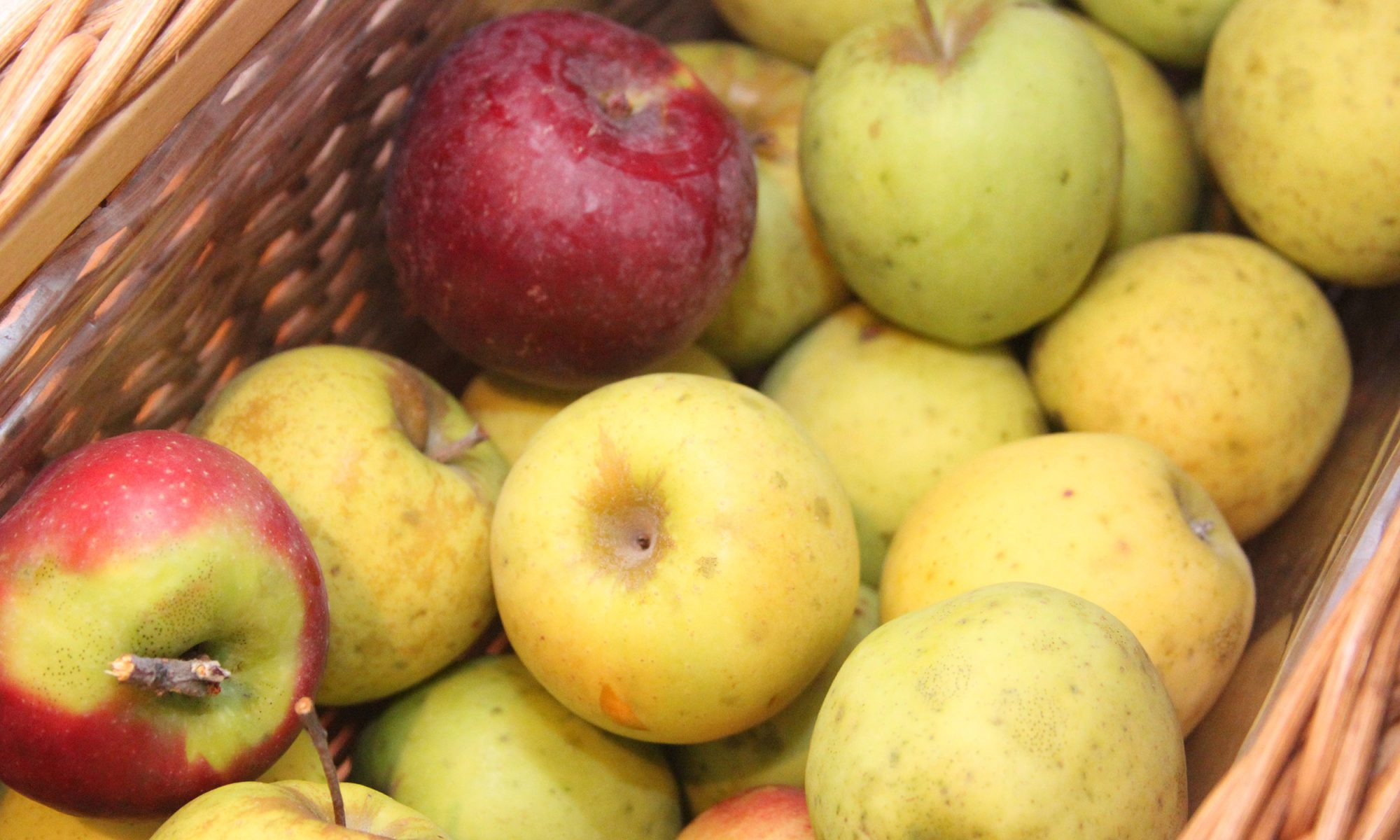 EC: Walmart Starts Selling Ugly Apples in Florida