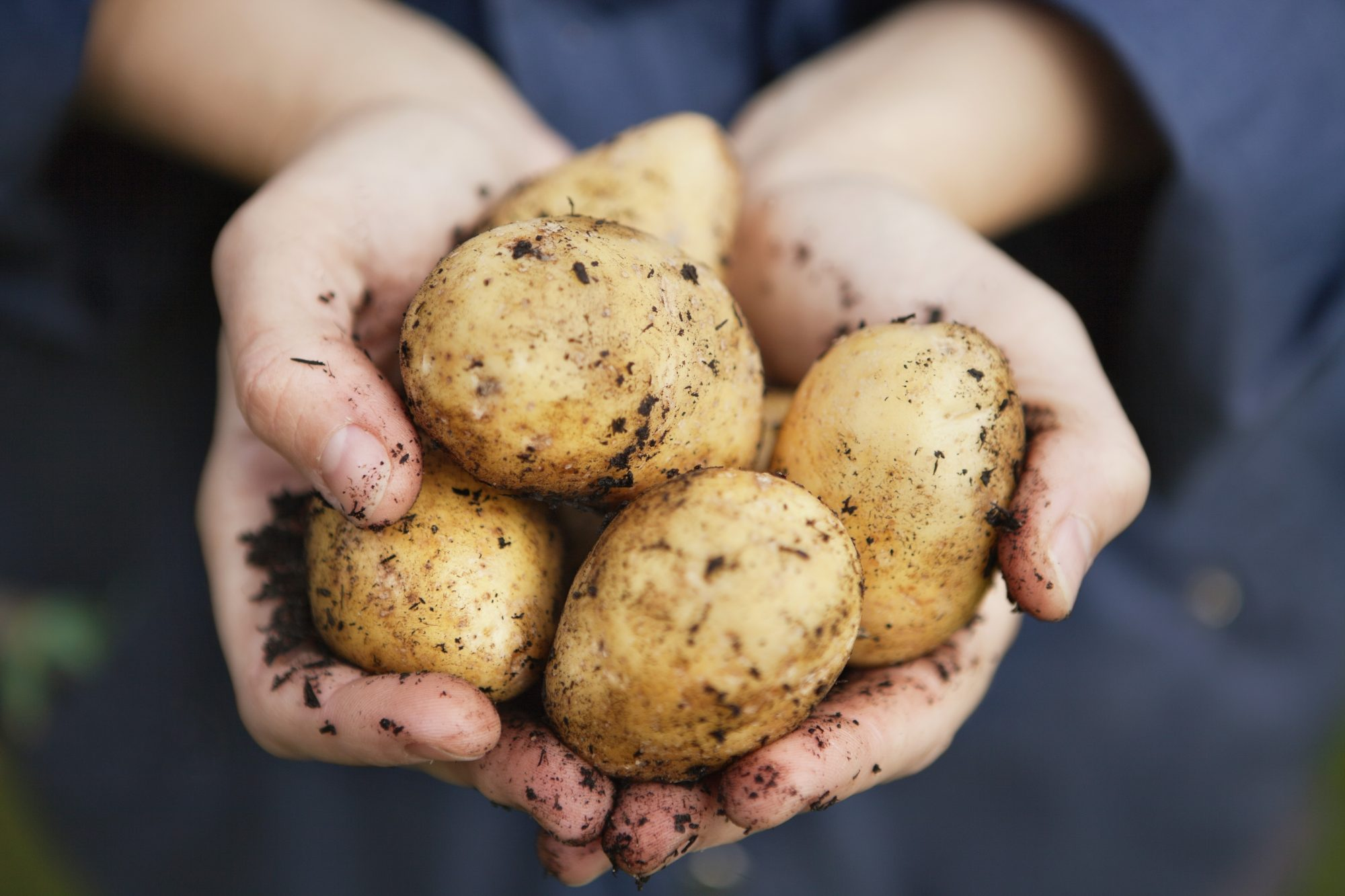 Potatoes In Hands Getty 4/16/20