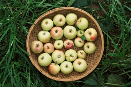 Types Of Yellow Apples