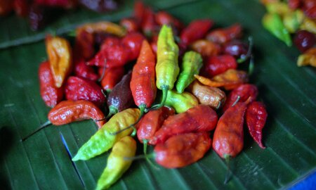 Nobody Has Eaten a Dragon's Breath Pepper Because It Will