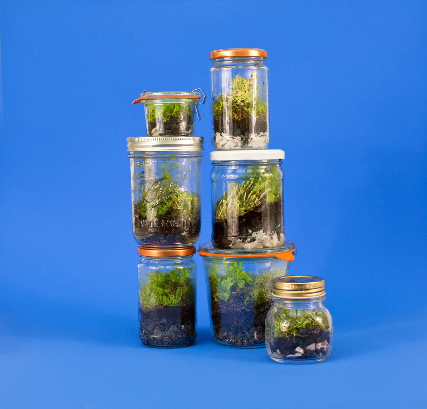 Jam Jar as a Terrarium
