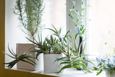 16 Low-Maintenance Indoor Houseplants Most Likely to Survive ... on house plant poles, house plant trays, house plant containers, house plant watering devices, house plant holders, house plant stakes, house plant shelving, house plant supports, house plant stands, house plant hangers,