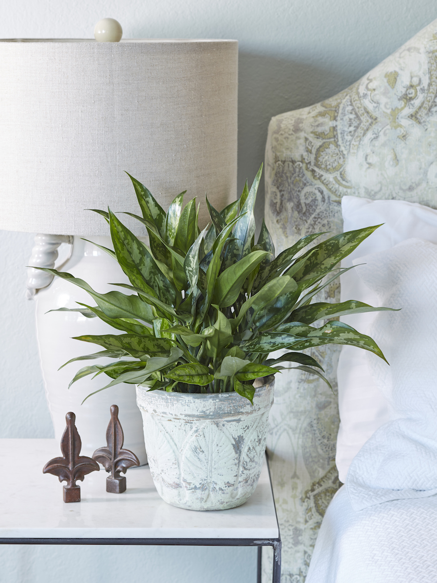 16 Low-Maintenance Indoor Houseplants Most Likely to Survive ... on house plants with white leaves, house plants with bronze leaves, house plants with variegated leaves, house plants with light green leaves,