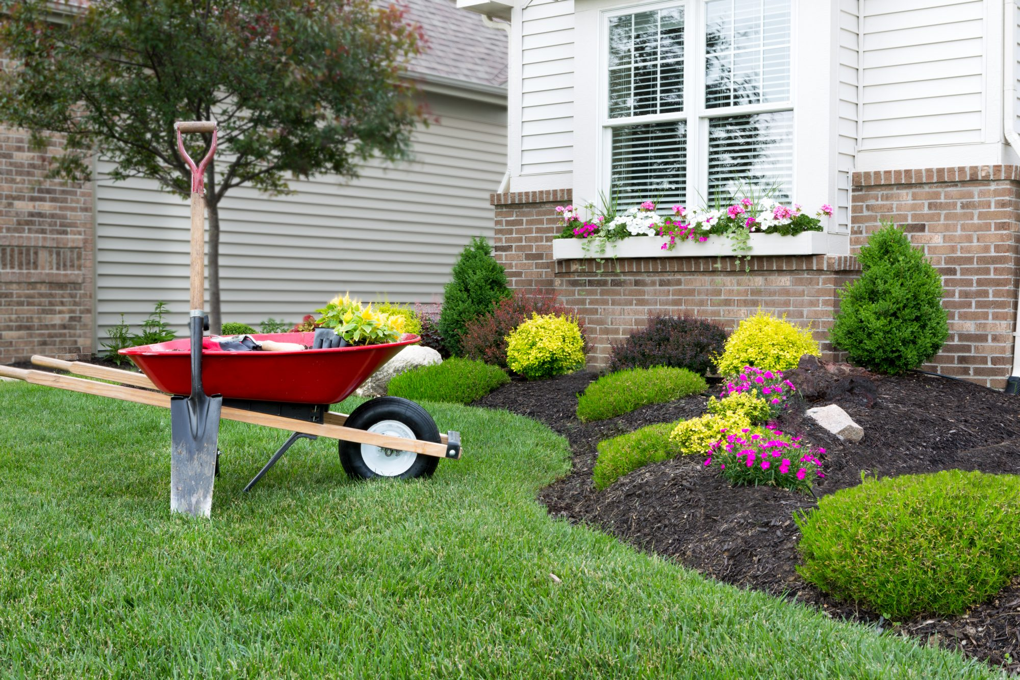 Yard Care Tips to Get Your Backyard Ready for Summer