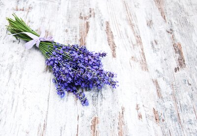 Lavender Repels Mosquitoes and Summer Just Got More Carefree | Real
