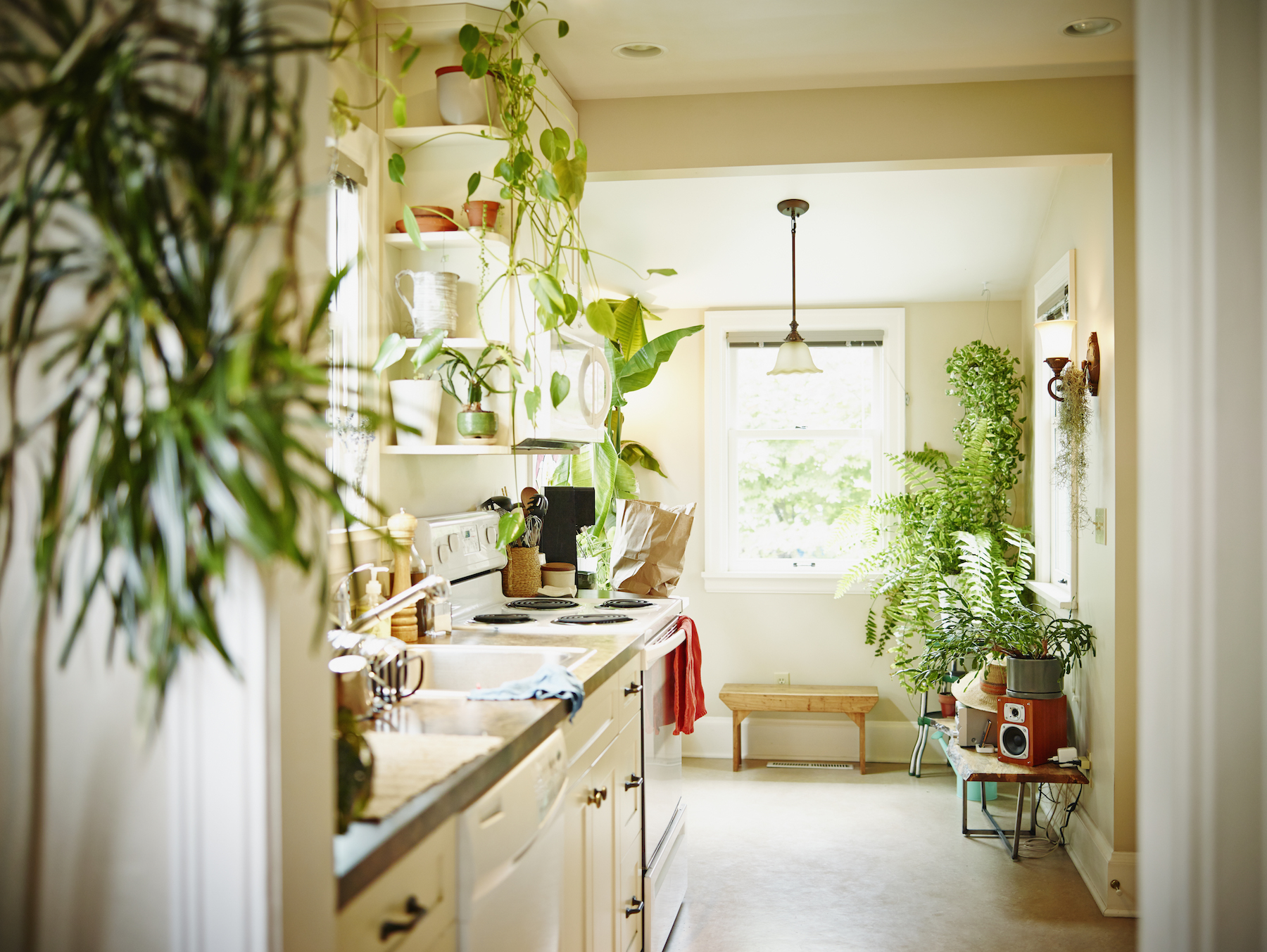 Decorating With House Plants Kitchen