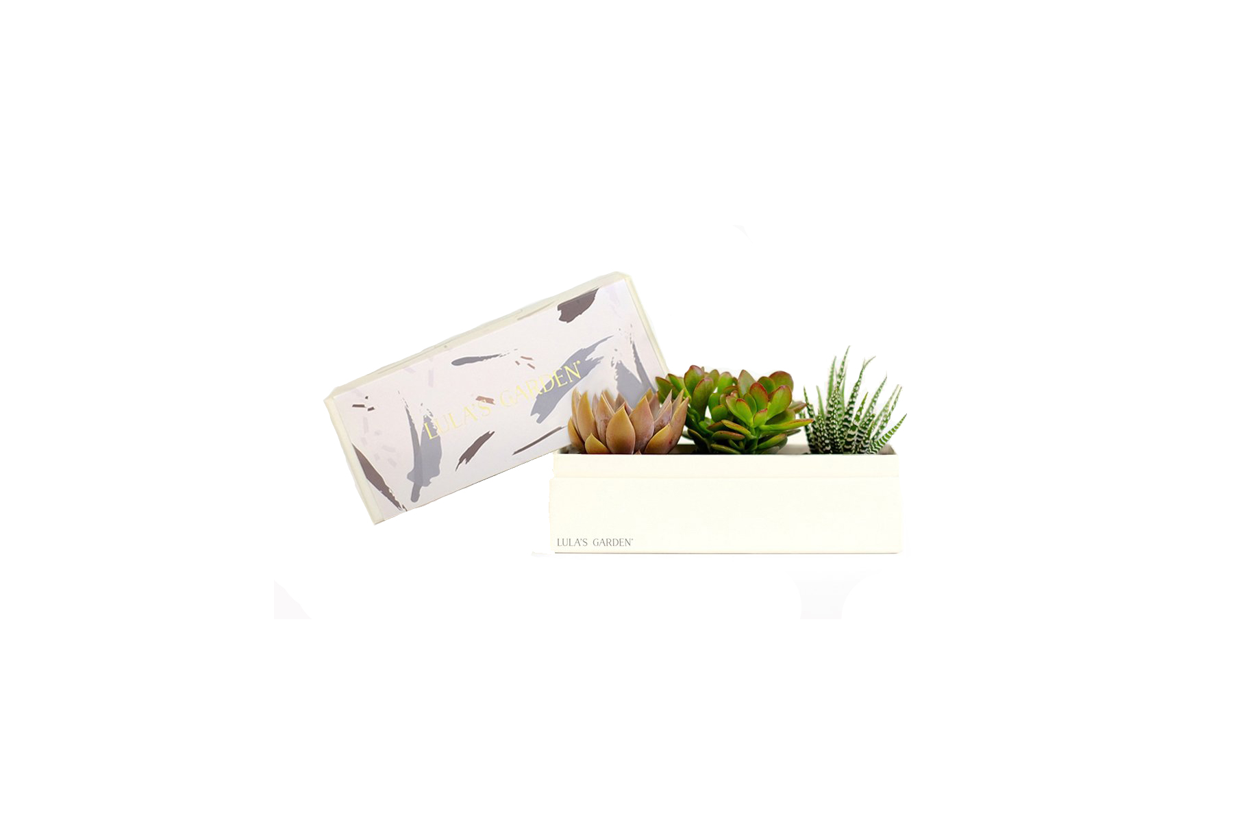 Lula's Garden Live Succulent Centerpiece and Gift Box