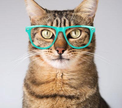 Science Says There S A Real Benefit To Watching Funny Cat Videos