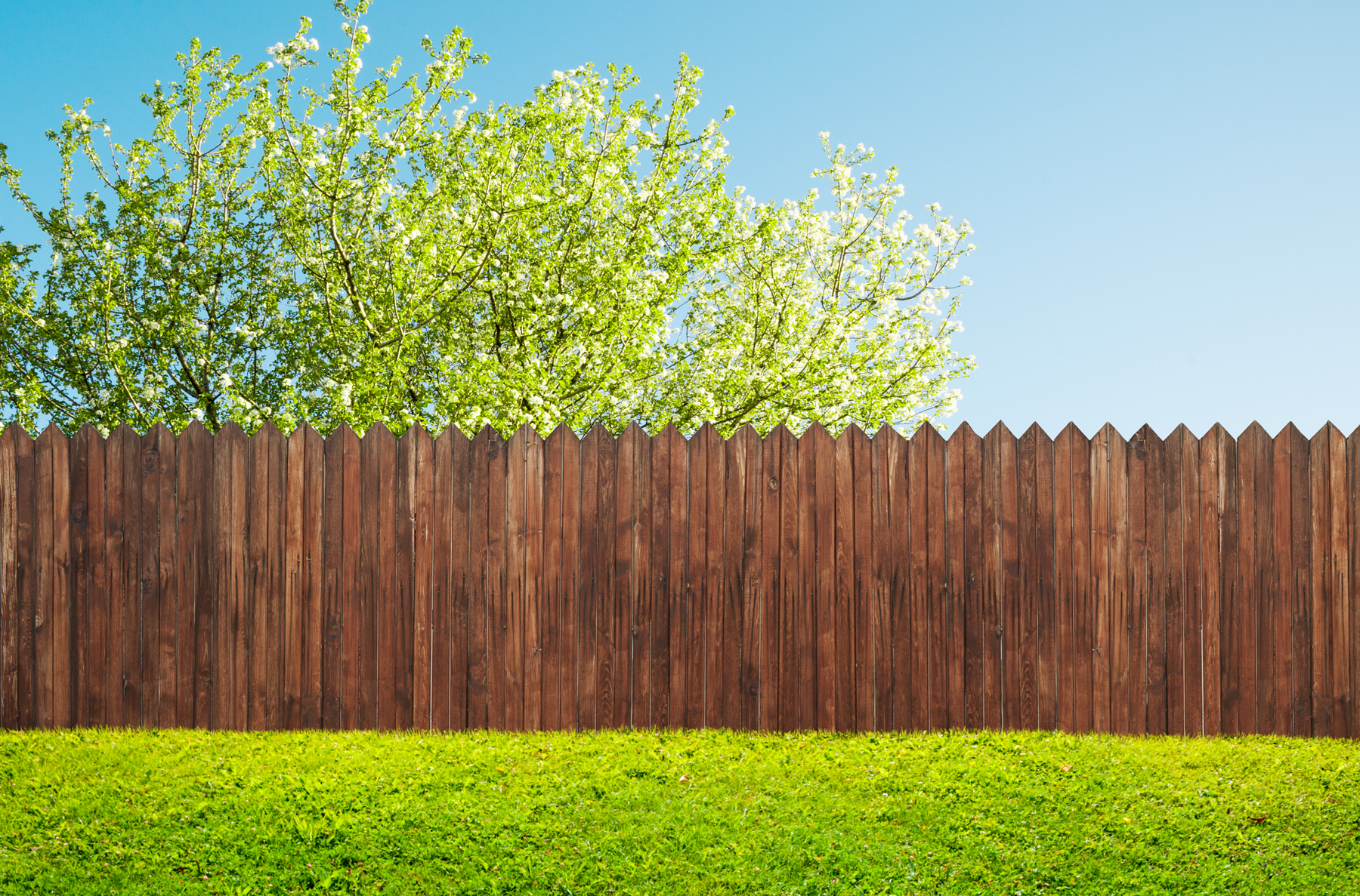 How and when to prepare your lawn for spring: a Green yard
